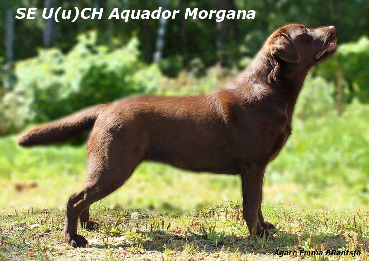 Aquador Morgana CH