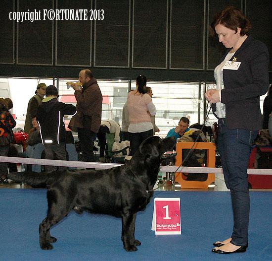 psi sampionu Dolbia Will to please copy